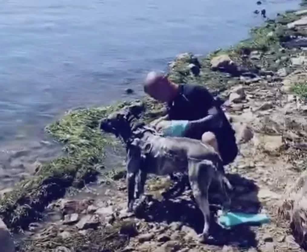 """云南大理洱海的游客因""""洗狗""""被罚款1000元"""