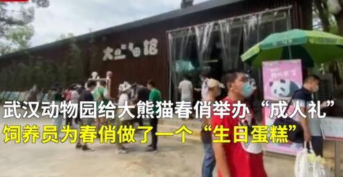 动物园为熊猫举行了一个熊的仪式。饲养员:粪便是芳香的。