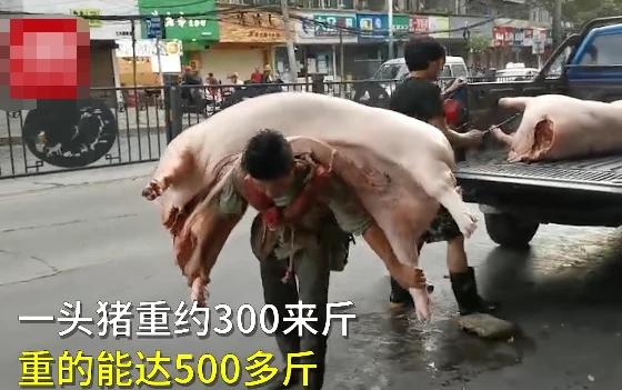 硬核!110斤男人每天扛着数万斤猪肉,扛着一个七口之家。