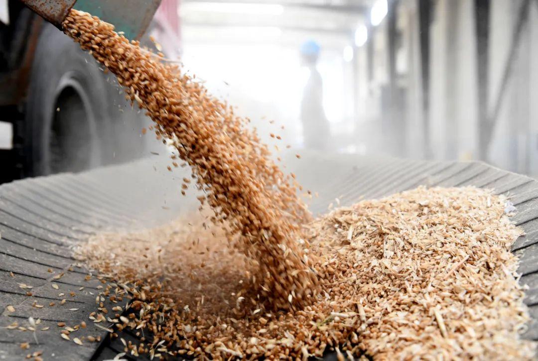小麦收购同比减少近千万吨。对粮食安全的高度关注意味着什么?