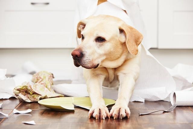 狗在校园生活,那训练狗狗要什么方式比较好