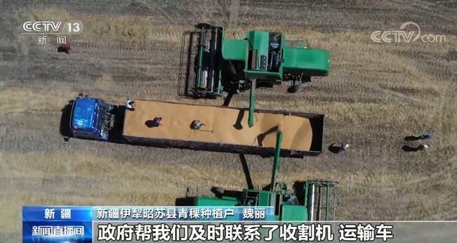 新疆:特色粮食作物收获了, 小品种增收大产业