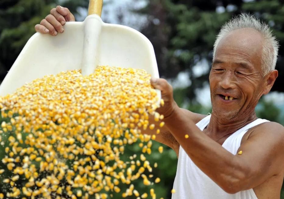 中国玉米增产潜力最少得1.8亿吨, 粮食三大瓶颈一定要打破