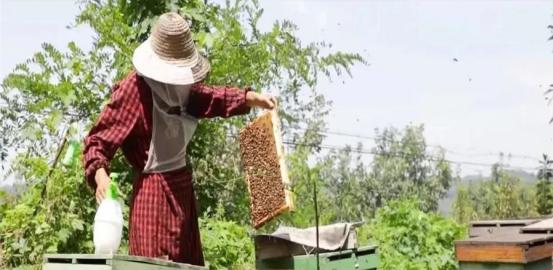窦师傅的美好生活:养蜂致富道路