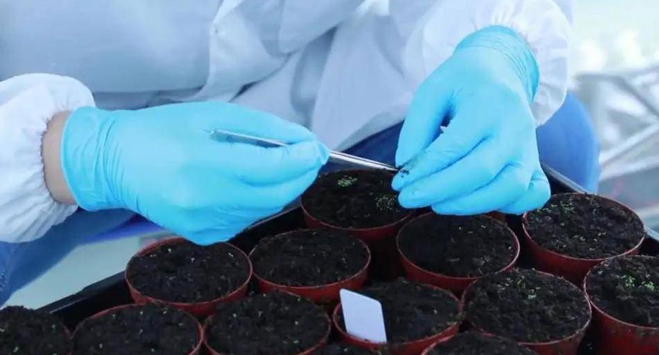 """植物怎样抵抗病毒?科学家发现了""""反病毒劫持""""的重要蛋白"""