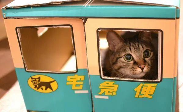 日本网友狂点外卖,只为了一个包装盒,猫咪有可能是营销的关键