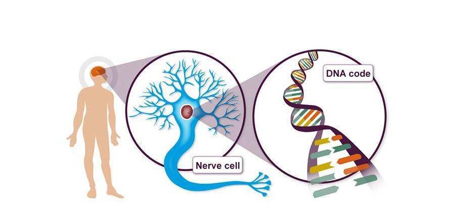 """阿尔茨海默病的新致病基因可能被""""捕获"""
