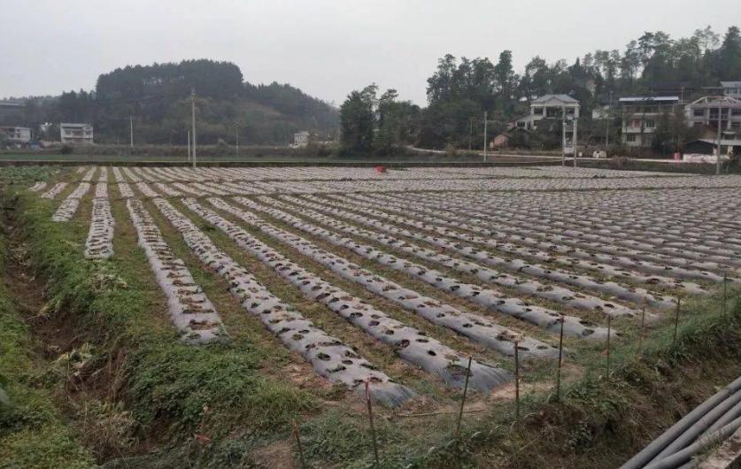 胡春华强调 :毫不放松密切关注秋冬种植工作