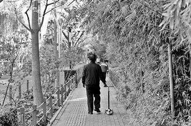 北京:西城区计划建造99条慢行林荫示范路