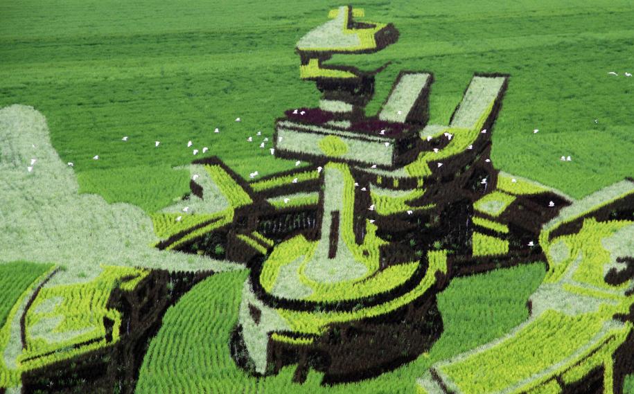 渤海湾新农业:盐碱转化为智慧稻田