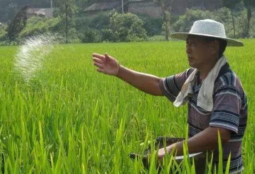 """浙沪联手解决水稻肥药""""减量难"""""""