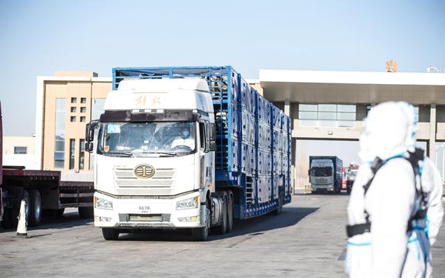 11月13日,内蒙古出入境边防检查总站二连出入境边防检查站执勤民警对载羊车辆进行车体检查。