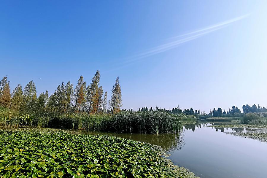 昆明湿地保护利用和谐共生 ,COP15全球一起欣赏滇池美