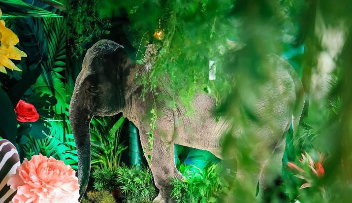 展示野生动物神韵, vivo S7极致拍摄绝了