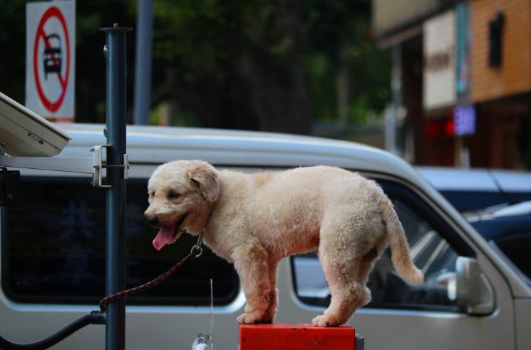 美国宠物用品电商公司Petco拟在纳斯达克上市_跨境电商_电商报