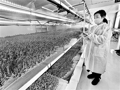 """芽苗菜""""智能种菜机"""",2021年将推广到农业园区"""