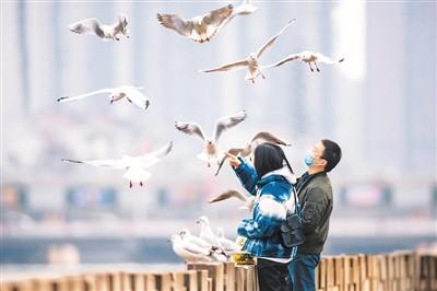 冬季到德阳来观看鸟