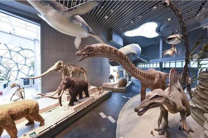 """随着科技和文化的融合,上海自然博物馆已经变成了""""保留"""""""