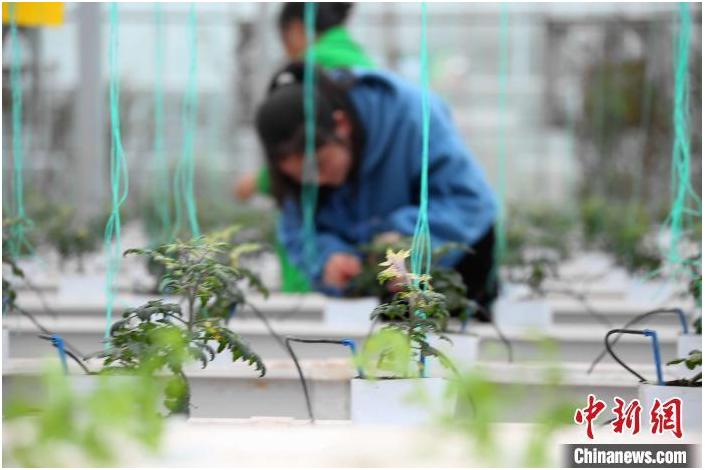 农业应用型人才短缺问题专家关注农业院校非农业转型趋势
