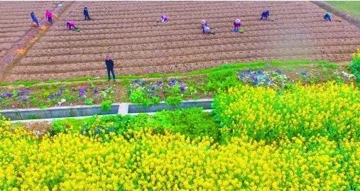 春回大地暖, 种粮正是农时